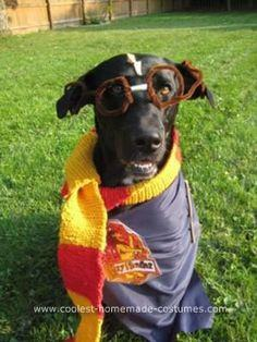 Homemade Harry Potter Pet Costume