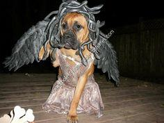Homemade Medusa Dog Unique Halloween Costume Idea