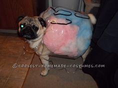 Coolest Cotton Candy Dog Costume Idea
