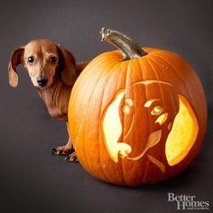 Carving a dog pumpkin