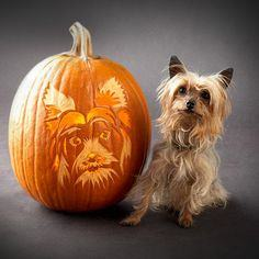 Yorkshire Terrier pumpkin pattern